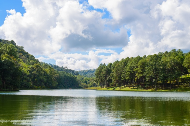 lake-with-trees-sides_1253-124